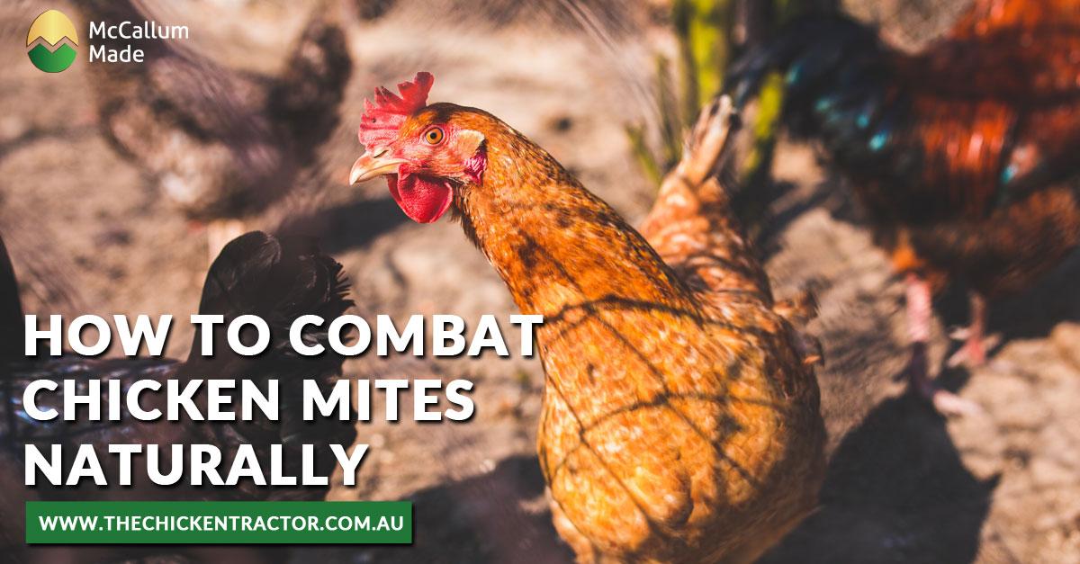 Combat Chicken mites Naturally