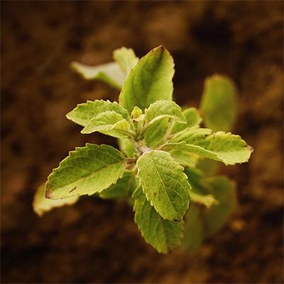 Farm and Garden fertilizer