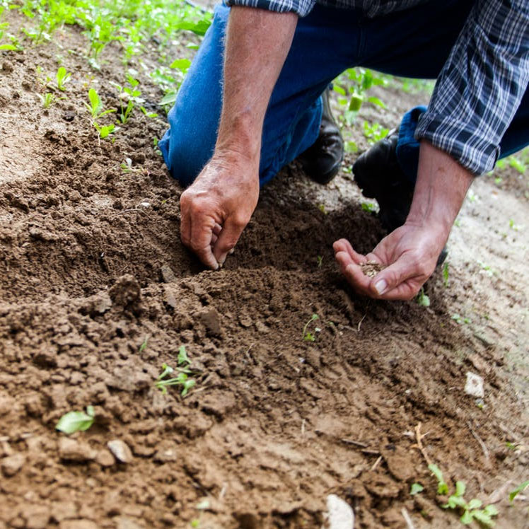The Problem with Traditional Vegetable Gardening?