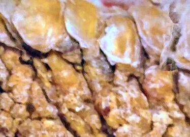 chicken mites cause scaly leg